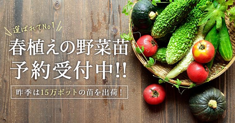 春植えの野菜苗、予約受付中