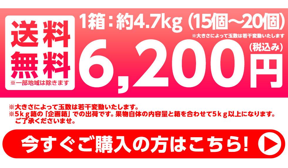約5kg(15個〜18個) 送料無料 4800円