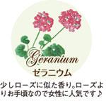 ゼラニウム