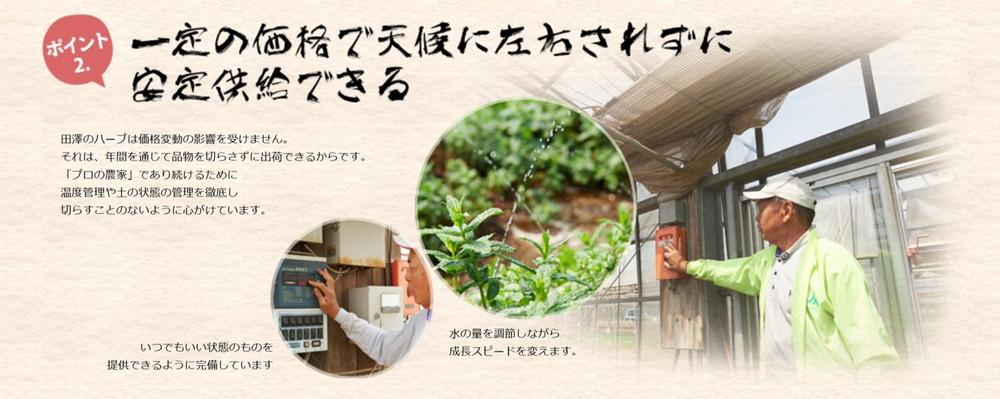フレッシュハーブ生産者・田澤さん