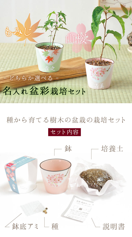 名入れ盆彩栽培セット(盆栽栽培キット)。もみじと山桜のどちらかをお選び頂けます。セット内容、鉢・培養土・鉢底アミ・種・説明書