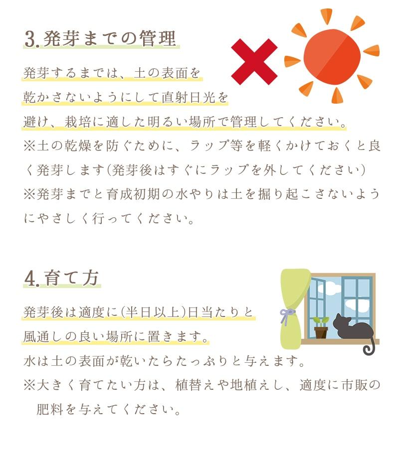 3.発芽までの管理。土の表面を乾かさないようにして直射日光を避け、栽培に適した明るい場所で管理してください。4.育て方。発芽後は適度に(半日以上)日当たりと風通しの良い場所に置きます。