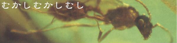 琥珀に閉じこめられた太古の昆虫