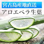 珊瑚の島の健康美容野菜アロエベラ生葉