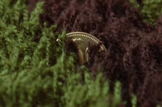 バニラシャギーラグの毛足の長さ