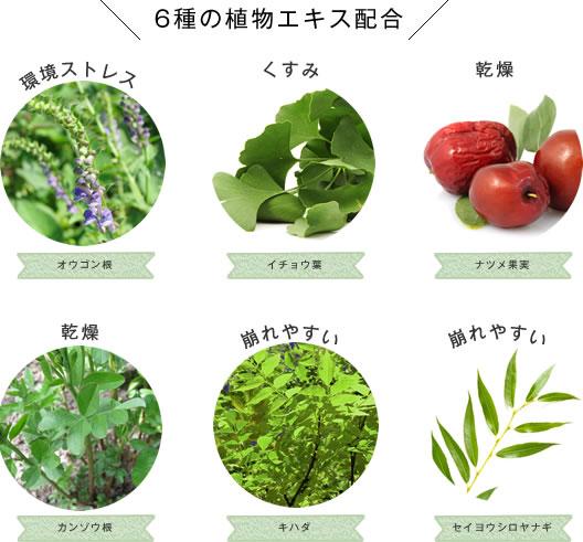 6種の植物エキス配合(オウゴン根、イチョウ葉、ナツメ果実、カンゾウ根、キハダ、セイヨウシロヤナギ)