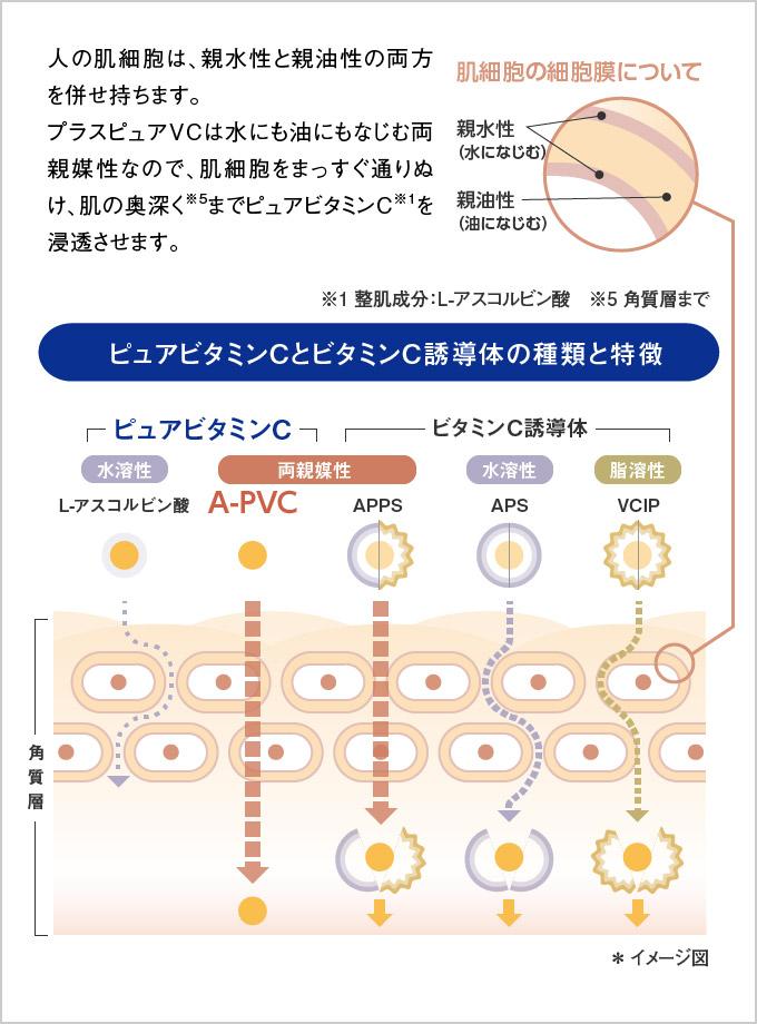 ピュアビタミンCとビタミンC誘導体