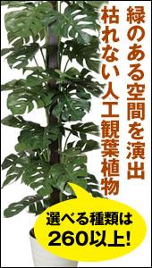 光の楽園 観葉植物