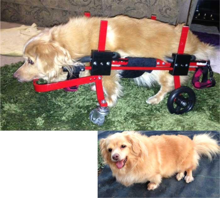 犬用車椅子 モニ