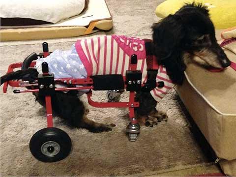 れいくん 犬の車椅子