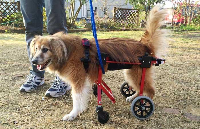 犬用車椅子 ユリちゃん