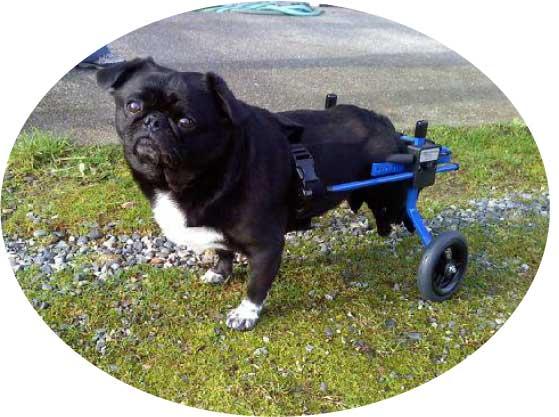 犬用車椅子 S