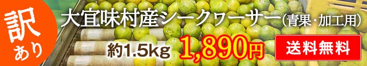 【訳アリ】シークヮーサー(青果・加工用) 1.5kg