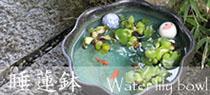 信楽焼 睡蓮鉢