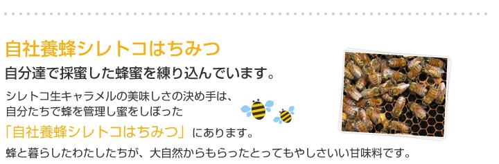 自社養蜂シレトコはちみつ