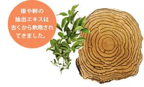 根や幹の抽出エキス